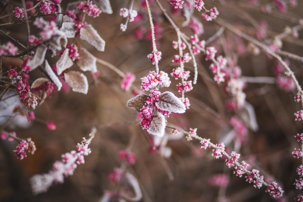 freezed flowers