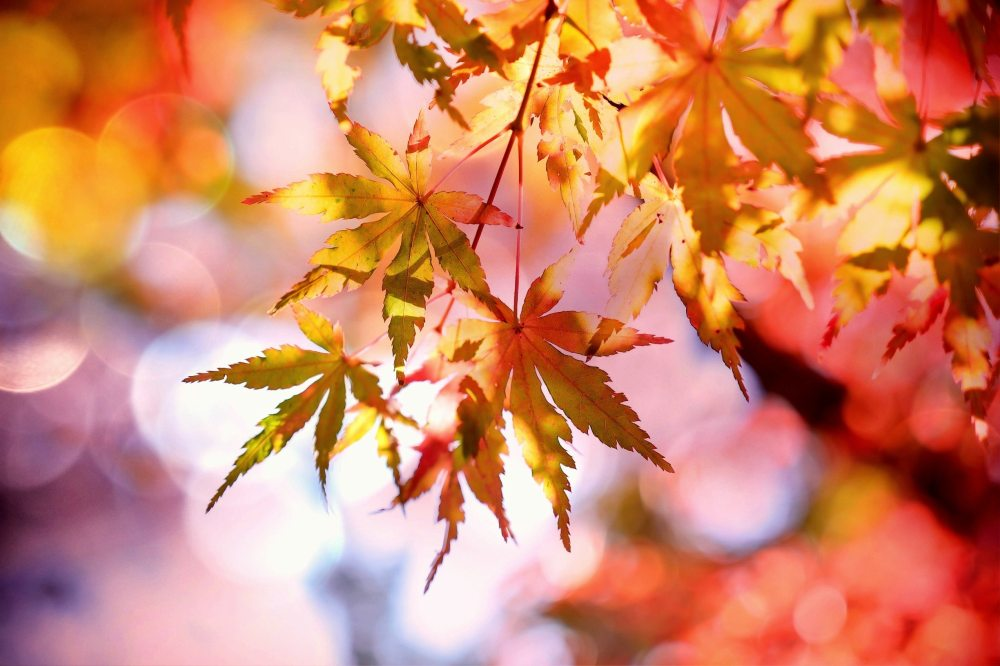 autumn-autumn-colours-autumn-leaves-355302